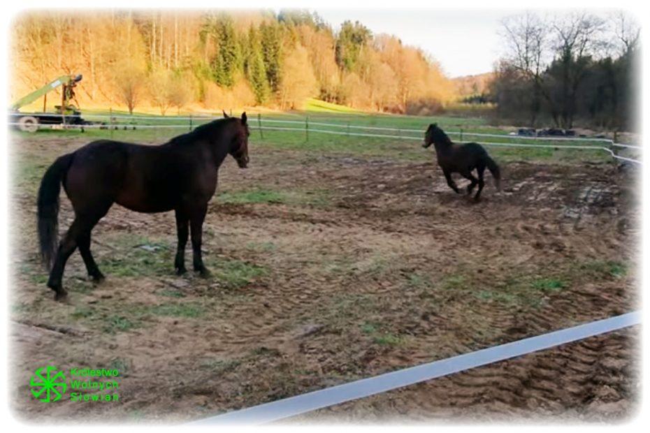 Wybieg dla koni :)